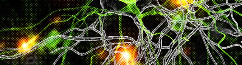 Neurocritical Care Division: Neurology and Neurotherapeutics