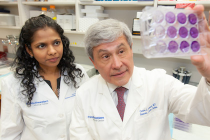 Researchers uncover two-drug combo that halts the growth of cancer cells