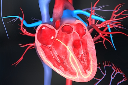 Changing what heart cells eat could help them regenerate