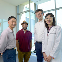 CRI researchers link absence of protein to liver tissue regeneration