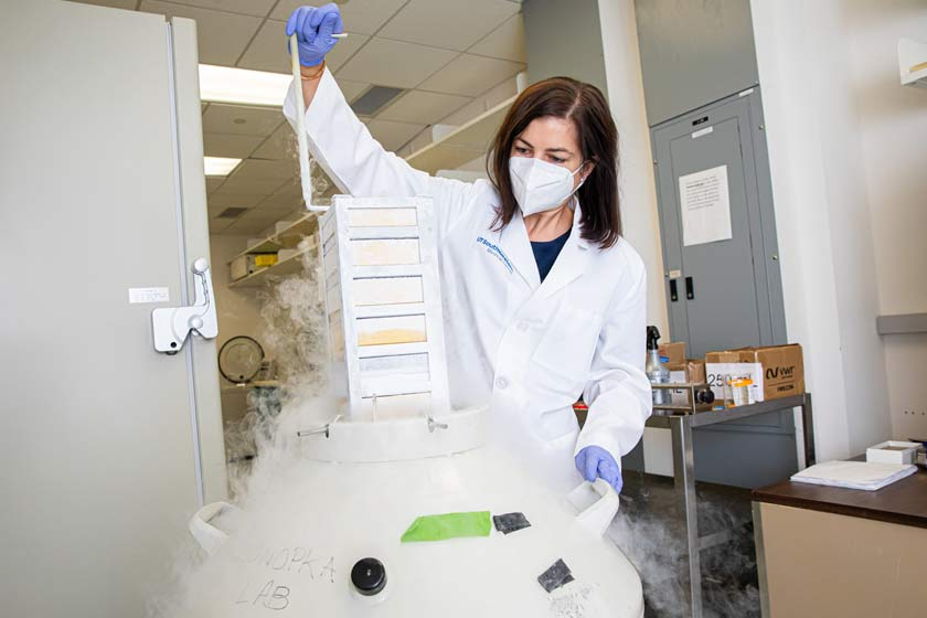 Woman in lab coat, mask, pulling stacks out of freezer