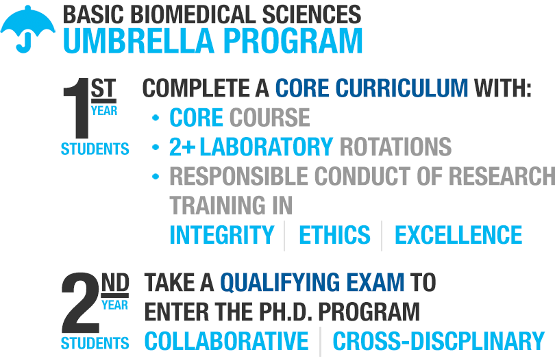 Basic Biomedical Sciences Umbrella Program; First-year students complete a core curriculum with: Core Course, 2+ Laboratory Rotations; Responsible Conduct of Research Training in Integrity, Ethics, and Excellence. Second-year students take a qualifying exam to enter the Ph.D. program: Collaborative and Cross-Disciplinary