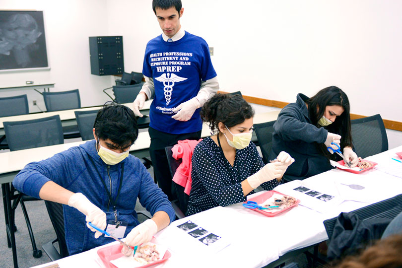 High school students work on a dissection project in the HPREP program.