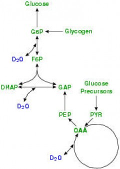 sources-glucose-1