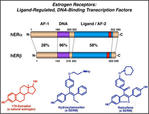 kraus-lab-estrogen-two-two