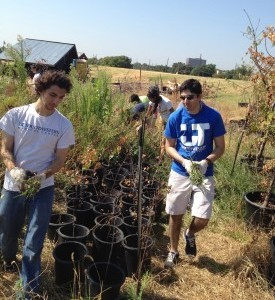 Volunteer Service Project