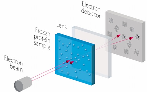 An electron beam is fired at a frozen protein solution. The transmitted electrons pass through electromagnetic lenses to create a magnified image on a detector, from which the structure of the protein can be worked out.