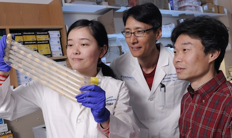 Mian Zhou, Joonseok Cha, Ph.D., Yi Liu, Ph.D.