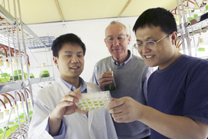Dr. William Snell (center), professor of cell biology, led the local research of an organism that led to key insights into the basic mechanisms of reproduction. Drs. Yanjie Liu (left) and Jue Ning, both postdoctoral researchers, also were involved in the international investigation, which may also point to a possible way to thwart the spread of malaria.