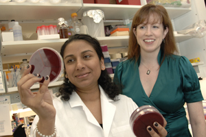 Dr. Lora Hooper (right) and other immunologists and microbiologists, including Dr. Shipra Vaishnava, have shown for the first time that the Paneth cells, which line the guts of mammals, play a major role in making sure that bacteria — both good and bad types — remain in the right places.