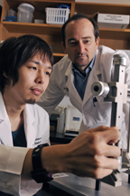 Research by Dr. Roberto Coppari (right) and Dr. Teppei Fujikawa suggests the brain is key to the metabolism-improving actions of leptin.