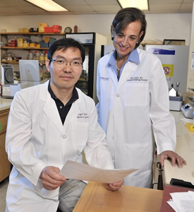 A UT Southwestern study that included Drs. Beth Levine and Yongjie Wei has demonstrated that the protein EGFR can interfere with the body's natural recycling process, leading to cancer growth and chemotherapy resistance.