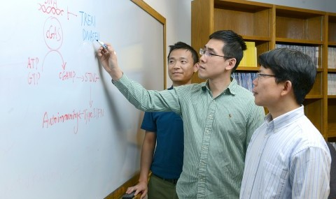 "UT Southwestern researchers involved in a study that found a causal link between an immune system enzyme and autoimmune diseases included (l-r) Dr. Tuo Li, Daxing Gao, and Dr. Zhijian ""James"" Chen."