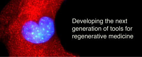Cell with a heart graphic. Text: Developing the next generation of tools for regenerative medicine.