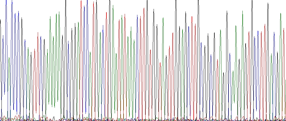 Sanger Sequencing Core Banner 2