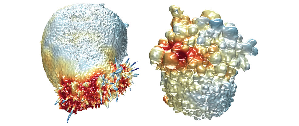 3D Cancer Morphodynamics