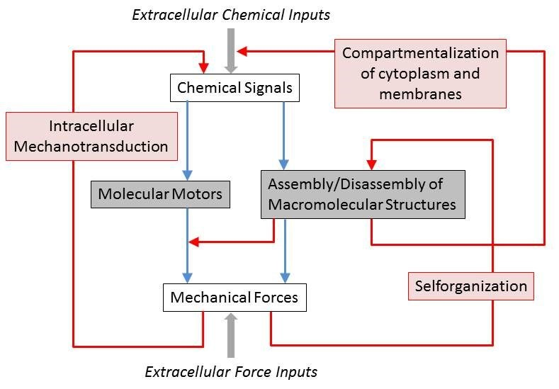 cytomechanochemical systems