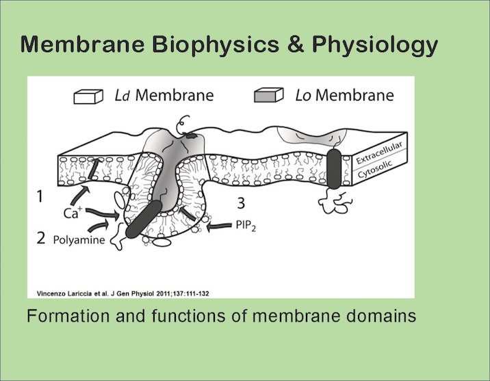 Membrane biophysics and physiology