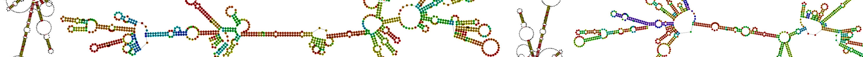 decorative banner for the Non-coding RNAs Kraus Lab Research Page