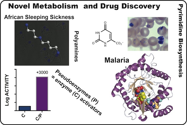 Novel Metabolism and Drug Development diagram