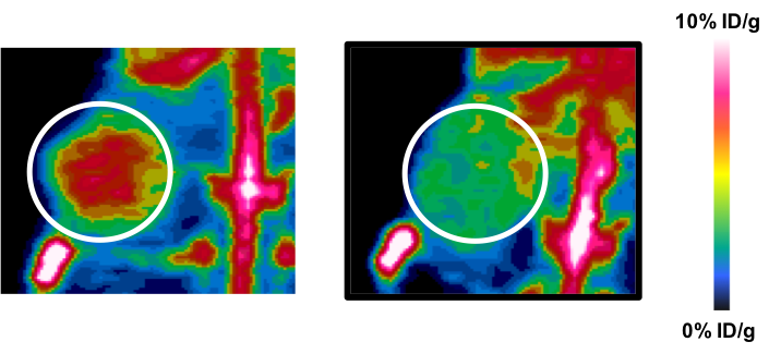 Left, illuminated tumor by iPET expressing immunotherapy target, compared to control tumor (right).